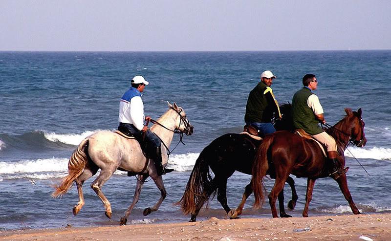 صور من إقليم الناظور في منطقة الريف شمال المغرب Bucana23
