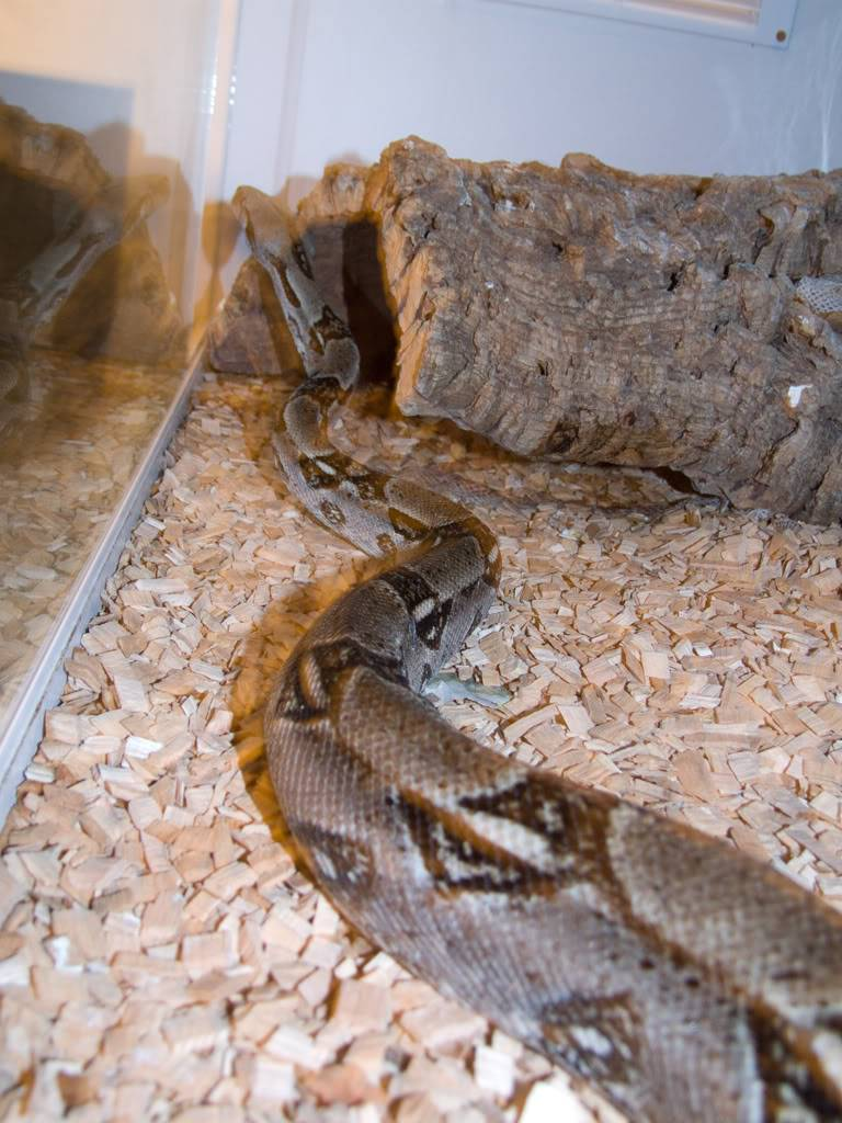 Got given a new snake! DSCF6923_edited