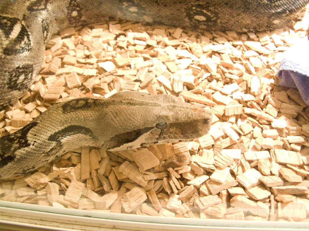 Got given a new snake! DSCF6926_edited