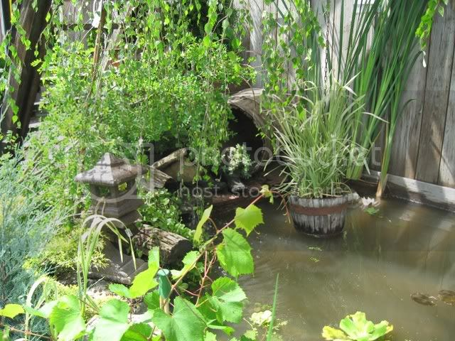 Ma visite au Jardin d'o (chez Pollito et Valentine) Photojuin2008016