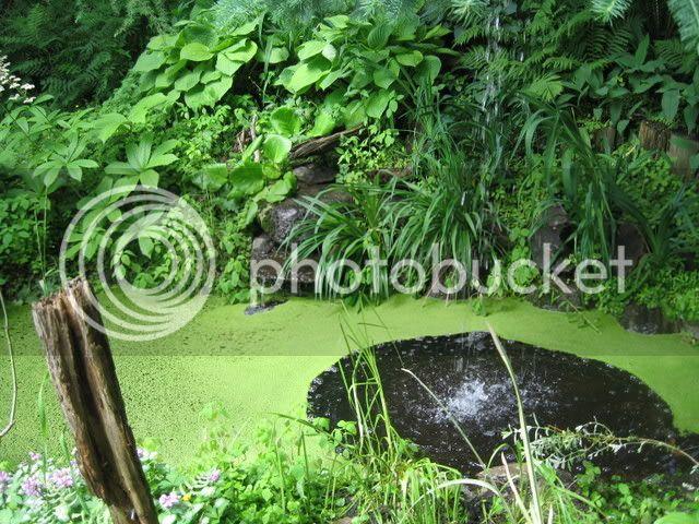 Ma visite au Jardin d'o (chez Pollito et Valentine) Photojuin2008017