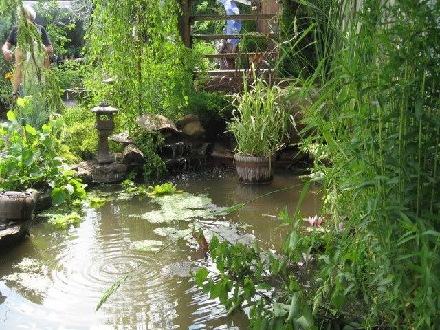 Ma visite au Jardin d'o (chez Pollito et Valentine) Photojuin2008022
