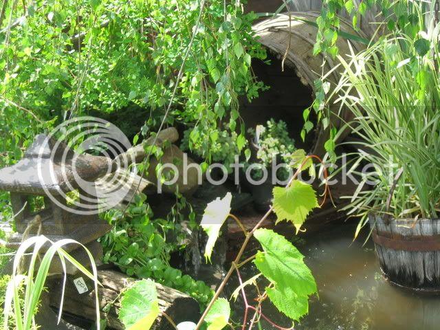 Ma visite au Jardin d'o (chez Pollito et Valentine) Photojuin2008023