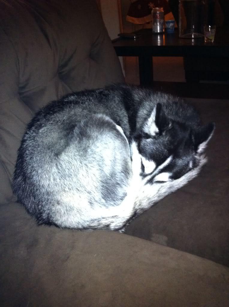 Show me your sleeping husky! 4127b359