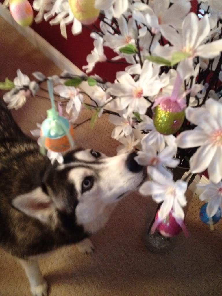 May HOTM: May Flowers- Chat Ba8ab793