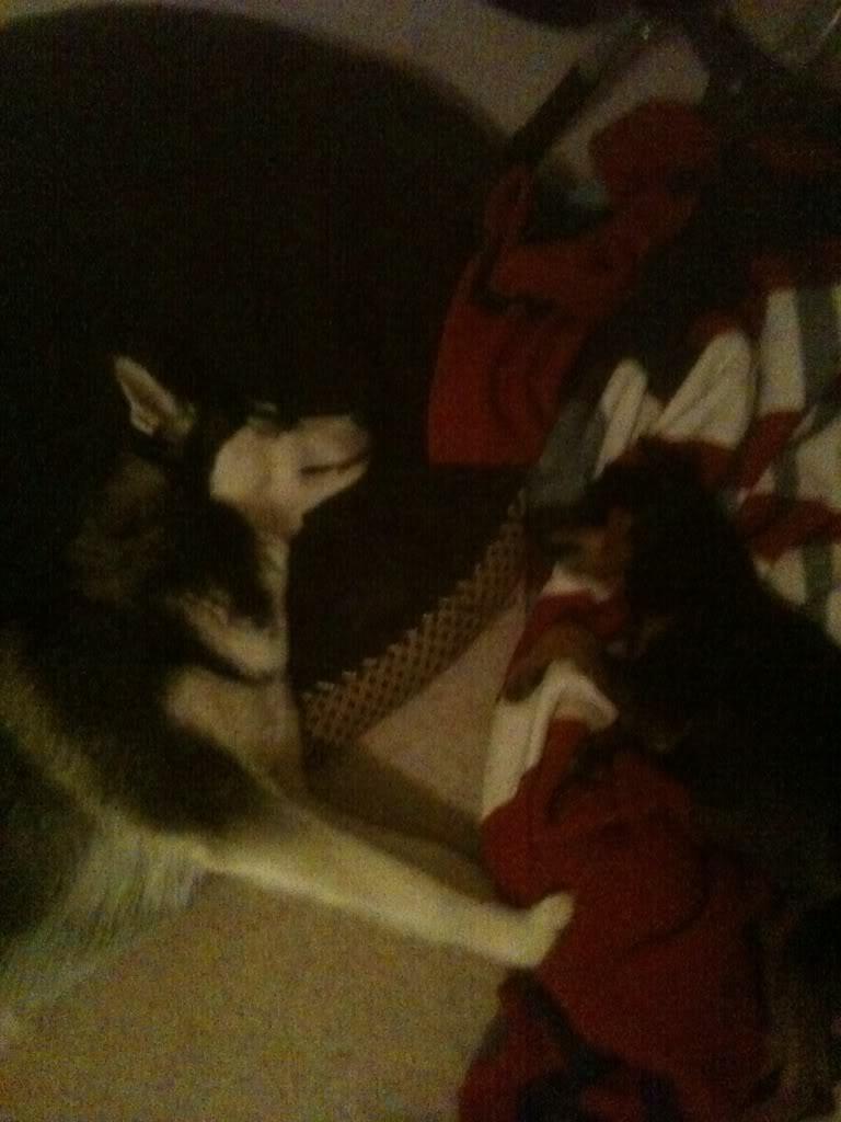 Show me your sleeping husky! Bec491a2