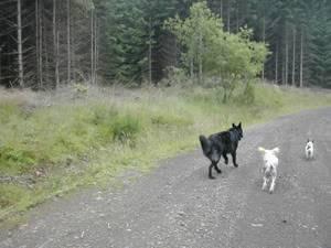 Pictures of our walks at cumbernauld dog walks Cobblerskiaer