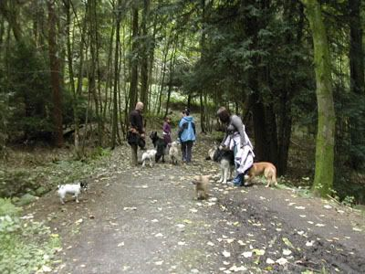 Pictures of our walks at cumbernauld dog walks Callanderpark