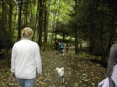 Pictures of our walks at cumbernauld dog walks Callender3