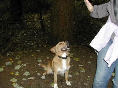 Pictures of our walks at cumbernauld dog walks Callenderstar