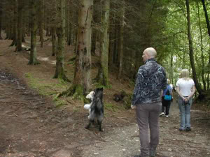 Pictures of our walks at cumbernauld dog walks Chatter01