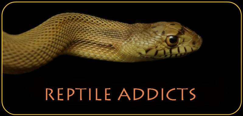 Reptile Addiction Forum