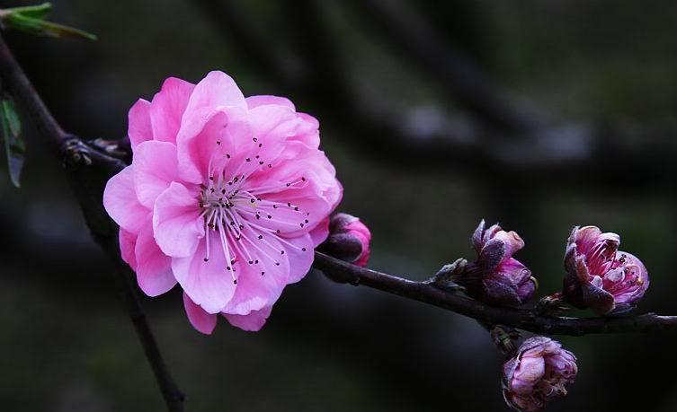 roses............................. ZNK7qA_PM8vdd3IZXup