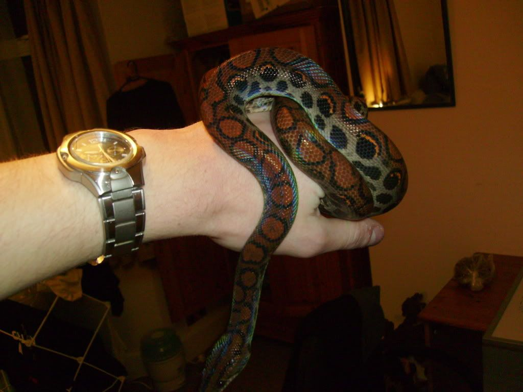 Pics of all my snakes... (pic heavy again) 521