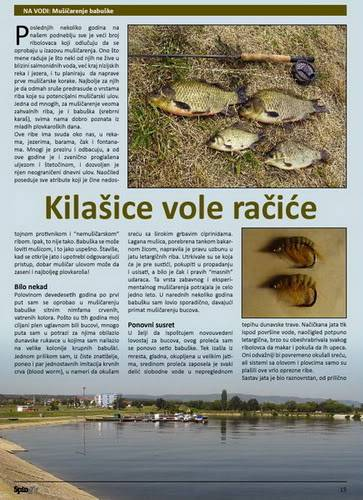 Spin & Fly magazin - Page 3 Babuske1