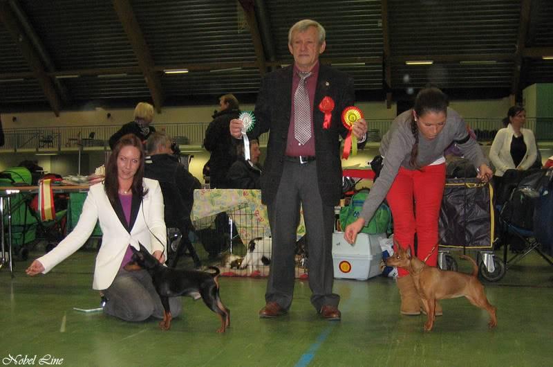 Norsk Dobermann Klubs romjulsutstilling 30.12.2011 BellaBIR30dec2011