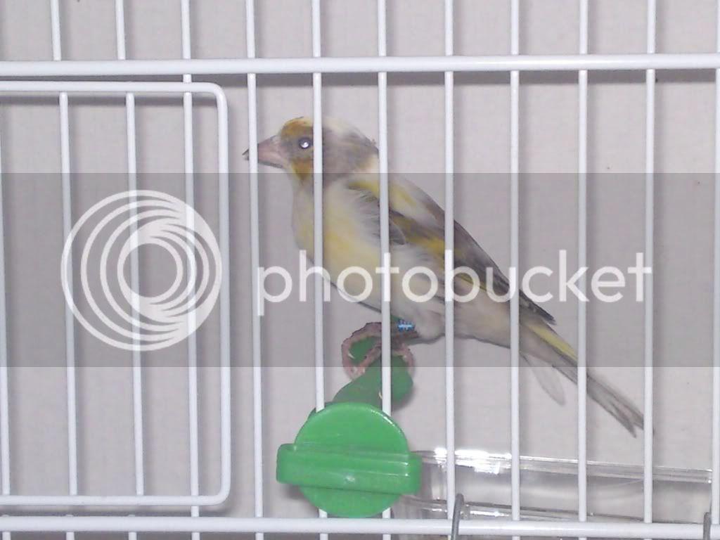 1η Έκθεση Πτηνών ΠΕ.ΣΥ.Π. 2011 DSC00191