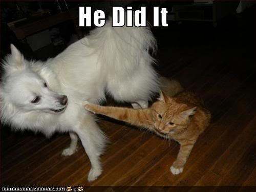 internet WAR!!!1 - Page 3 Funny-pictures-your-cat-blames-the-