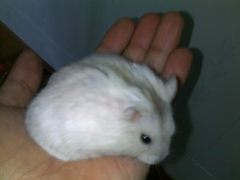 Tổng hợp về chăm sóc Hamster 10022011396