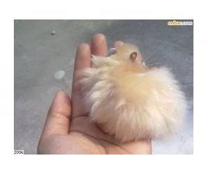 Cần Thơ - Chuột con petshop: thú cưng cần gả 201010161247_5