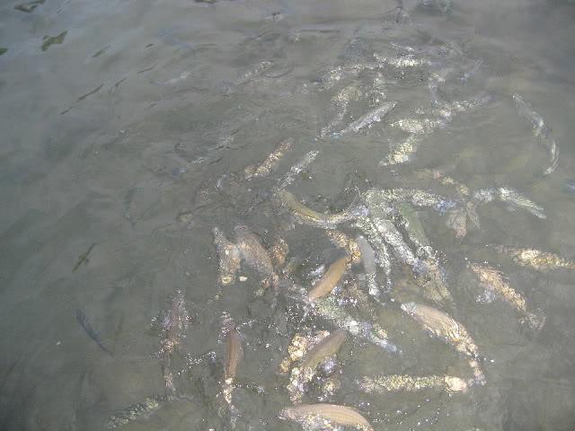 Puerta Pollensa Fish-1