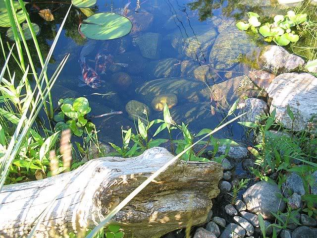 Mon bassin aquatique! Bassin009