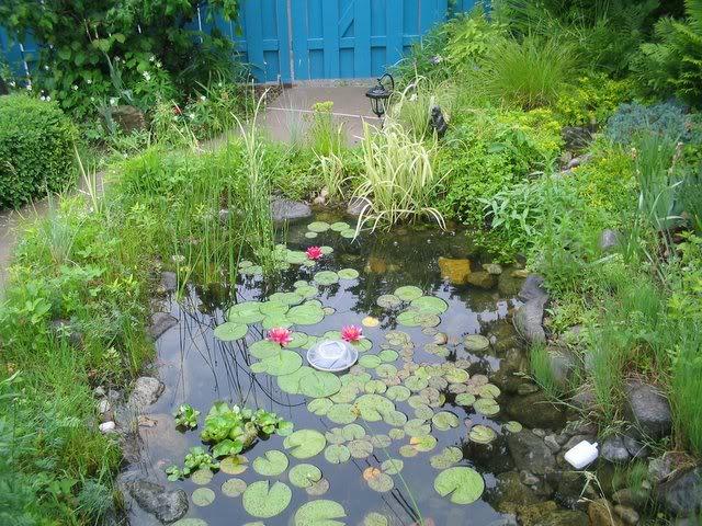 Mon bassin aquatique! Gorgedeau001