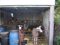 Our Goat Shed- warning lots of pictures! Ayr027MediumSmallWinCE