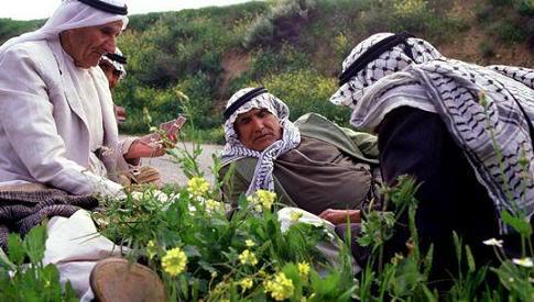 مدن فلسطينيه مع الصور 7-3
