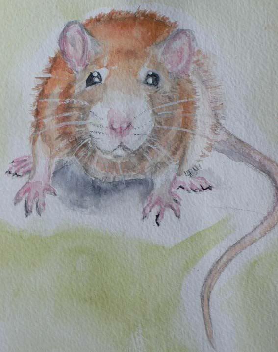 Popular artist? Rat