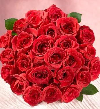 الورد الاحمر وسحر جماله..إإ 1277z