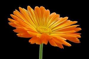 اكتب اسمك وشوف الوردة المناسبة لك ...جديد....نااااار Im006