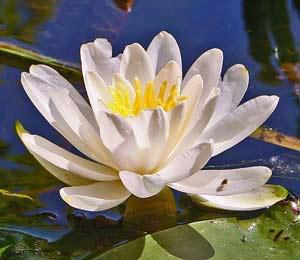 اكتب اسمك وشوف الوردة المناسبة لك ...جديد....نااااار Im021