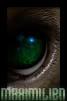Sivujuoni: Amalthaean kuppikunta AKM