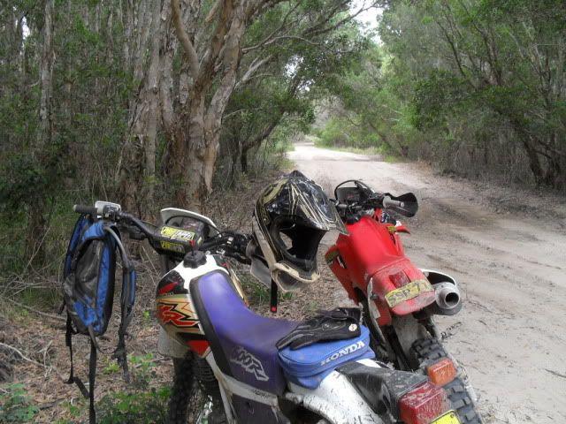 NE NSW Coastal run. SDC10012