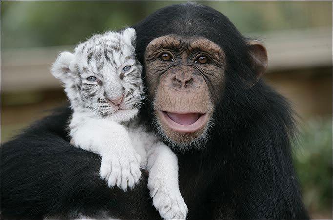 Ahora digan que los animales no sonrien 01
