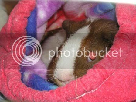 Cavy Cuddlers/Hammocks Cuddlebag1