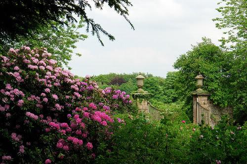 Silverwing Gardens Sizergh_castle_june_original
