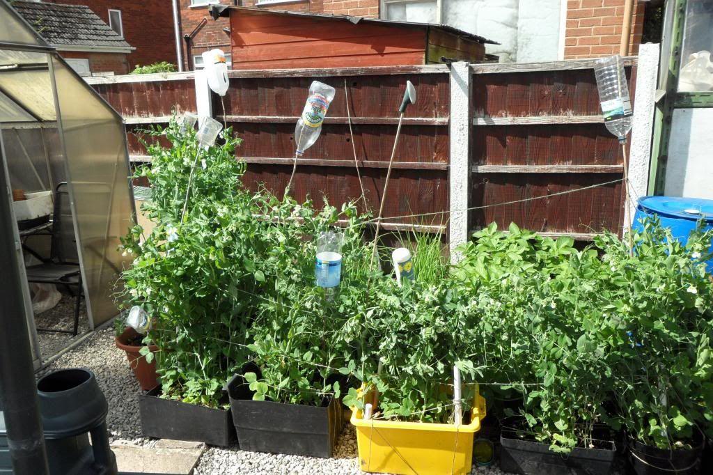Gardening Tips SAM_0393_zps5dacc94f
