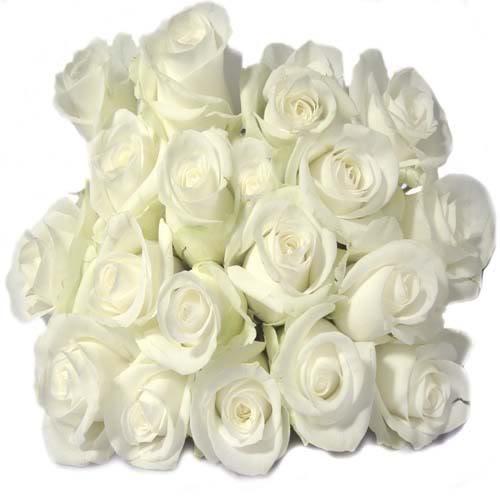 اجعل حياتك وردة بيضاء White20rose1