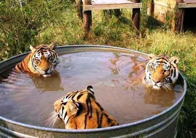 heboh trio macan mandi bugil!! [hidden cam] Trio-macan-40