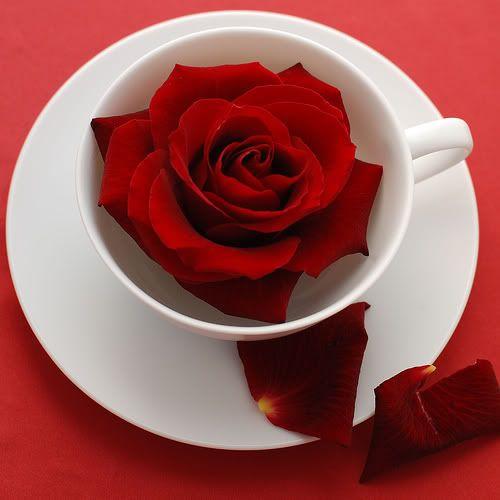 قهوتي هذا الصباح / المساء - صفحة 18 Roselol