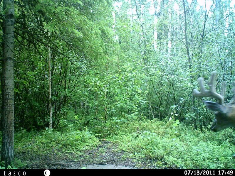 Bucks de l'Alberta sur mon territoire HUNT0020