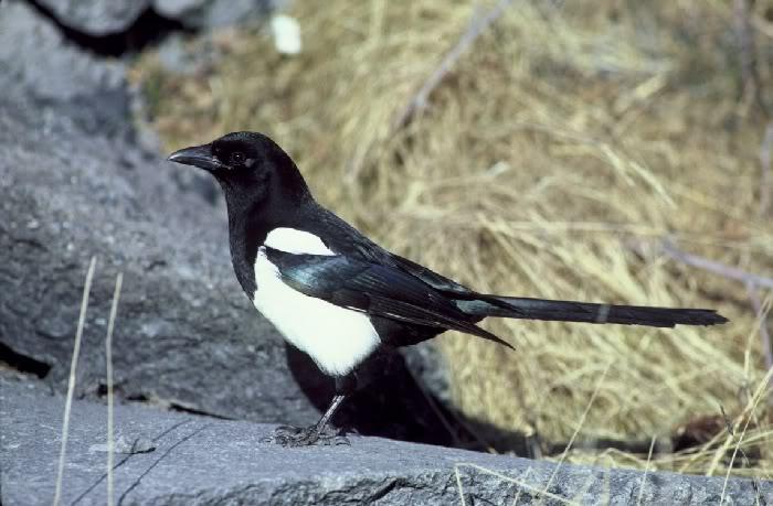 Davorinova Proljetna Kolekcija Ptica