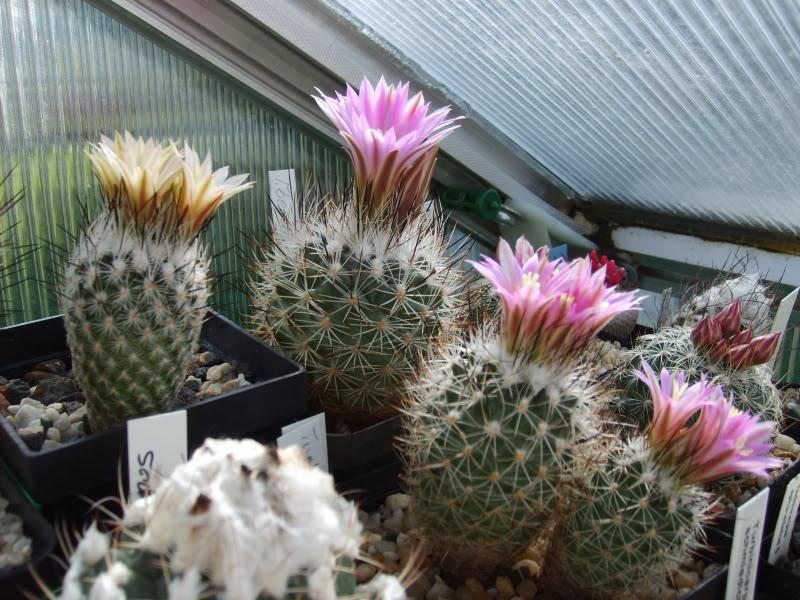 Blütenbilder 2009 SD531532