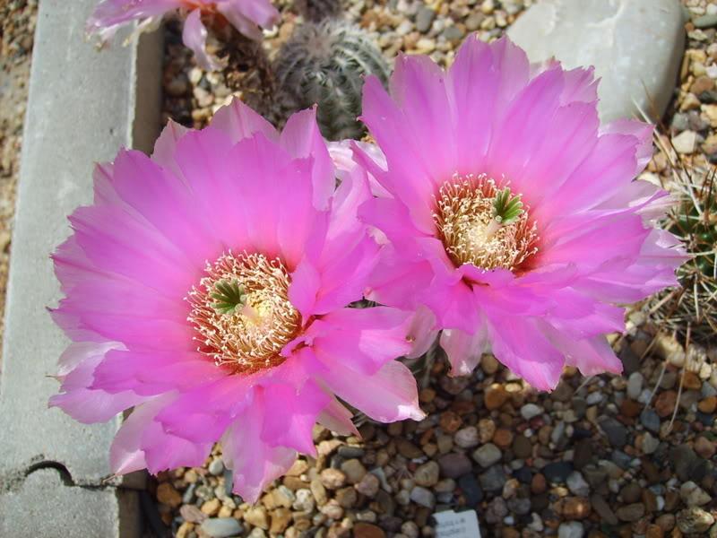 Blütensaison 2009 voll im Gange - Seite 4 SD531959
