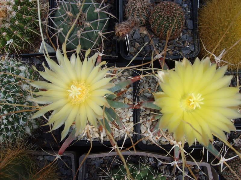 Blütensaison 2009 voll im Gange - Seite 4 SD531962