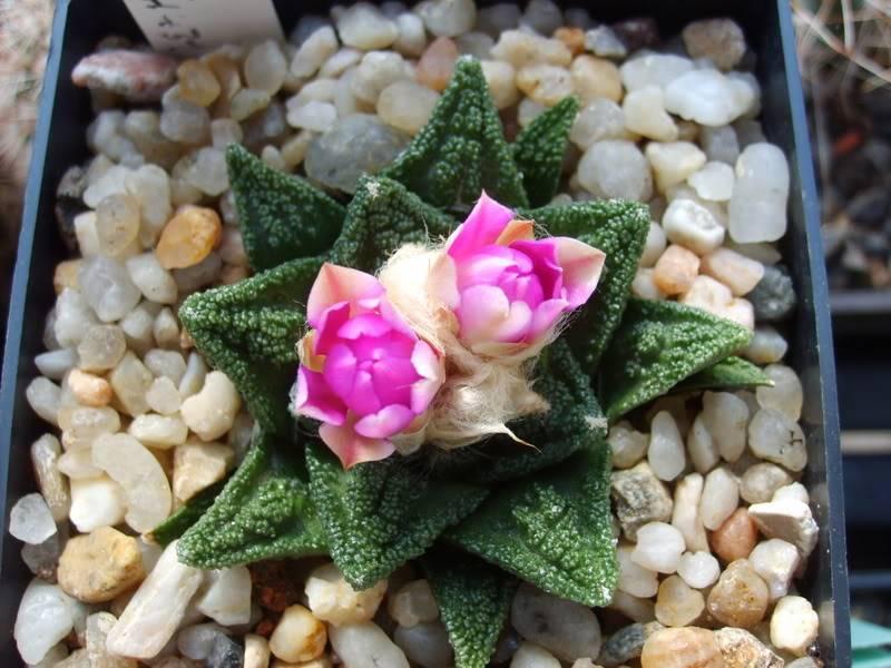 Blütensaison 2009 voll im Gange - Seite 12 SD532104