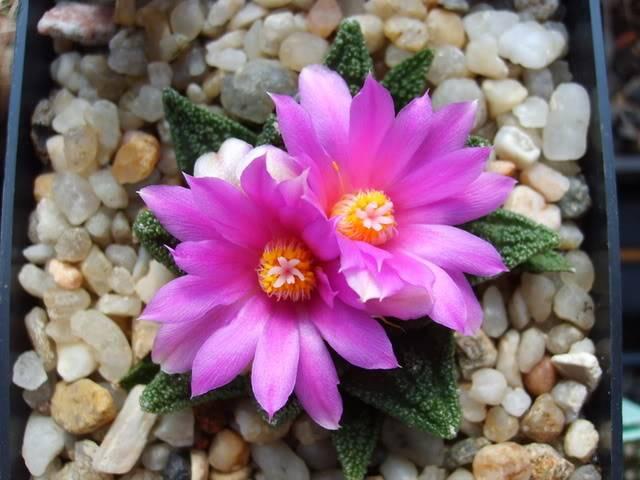 Blütensaison 2009 voll im Gange - Seite 12 SD532110