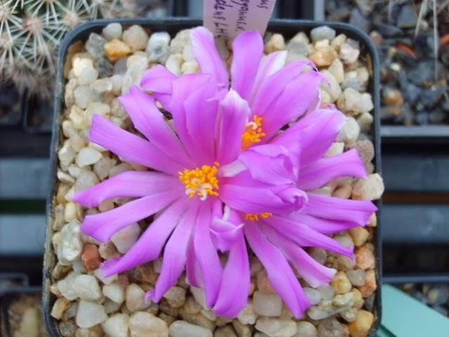 Blütensaison 2009 voll im Gange - Seite 12 SD532113